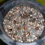 Malus seeds
